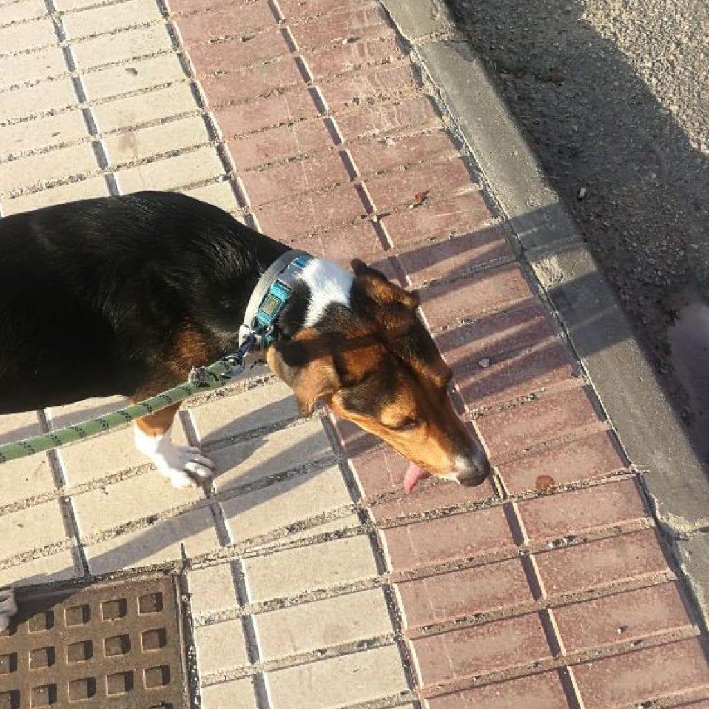 Corriendo con perro